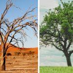 Scarcity vs Abundance during COVID-19